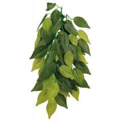 Silkeplante Ficus