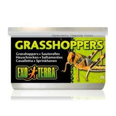 Exo Terra gresshopper 34g