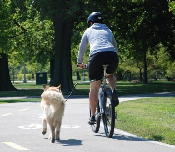 Cycleash hundespringer Universal