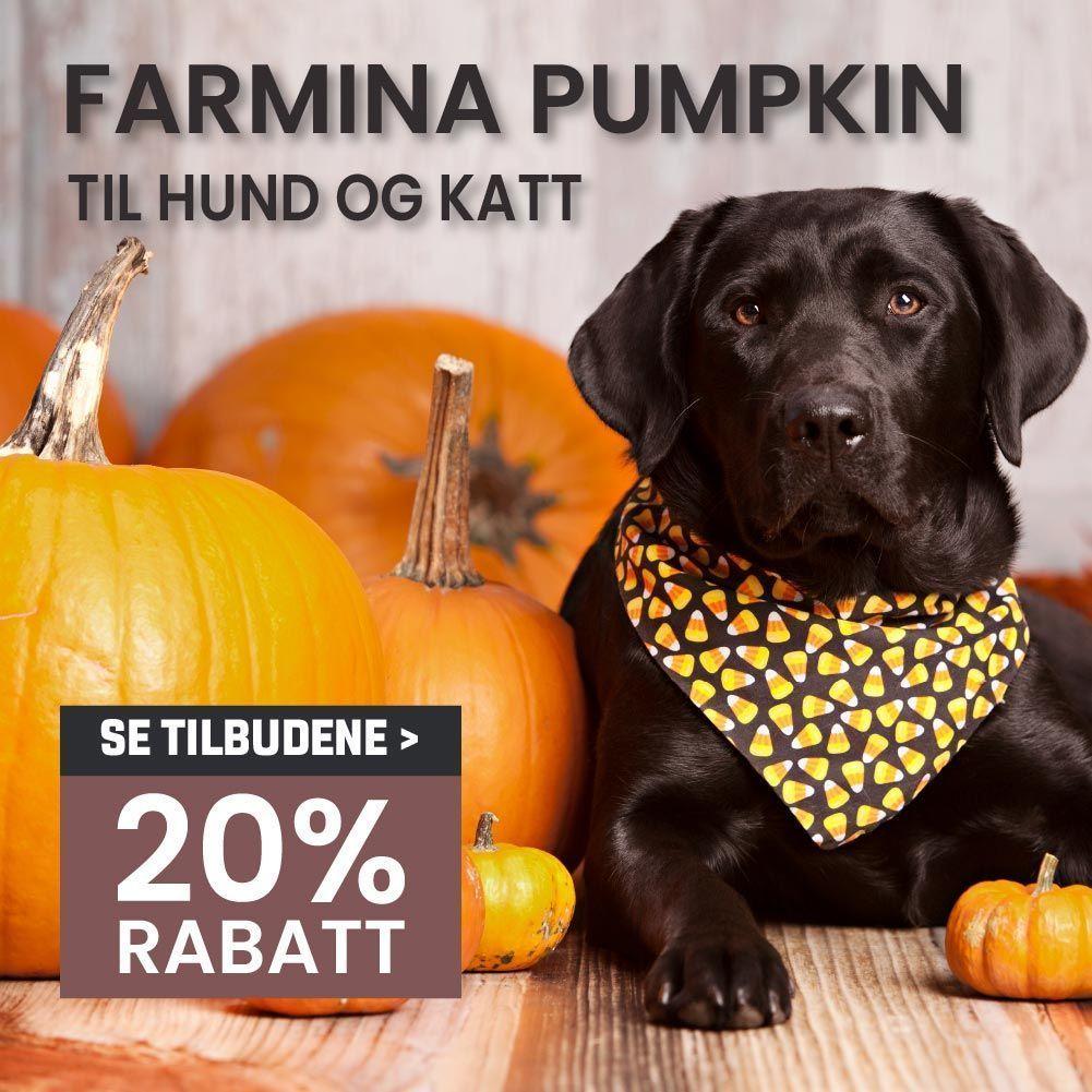 Farmina pumpkin til hund og katt